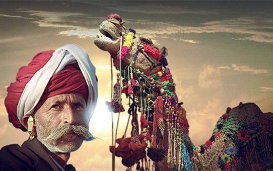 Биканерский фестиваль верблюдов