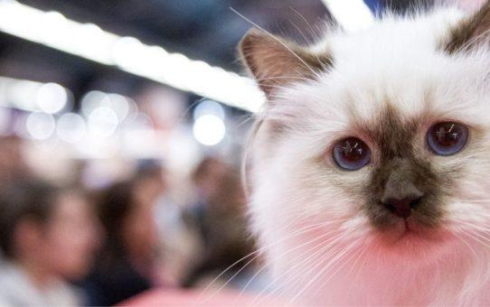 Выставка домашних животных Animal Expo в Париже