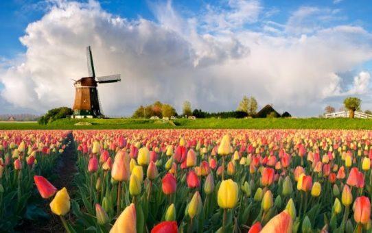 День мельника в Нидерландах