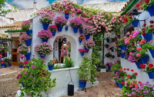 Фестиваль цветов «анфестирия» на Кипре