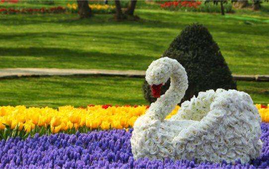 Фестиваль цветов в Тбилиси