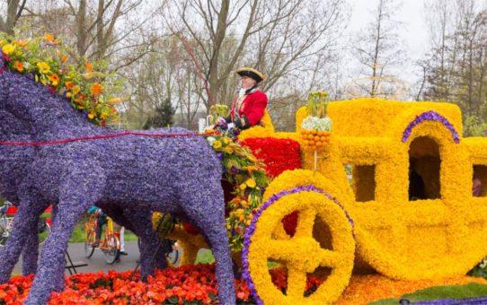 Парад цветов Bollenstreek в Нидерландах