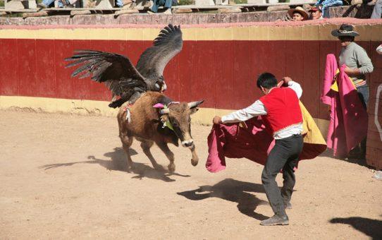 Явар Фиеста или фестиваль крови в Перу