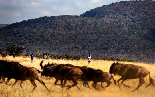 Марафон большой пятерки в Южной Африке
