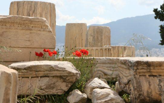 Цветение диких маков на Акрополе