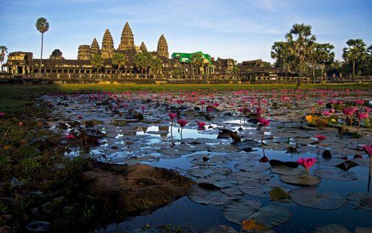Цветущий Лотос в Сием Рип и Ангкор Ват, Камбоджа