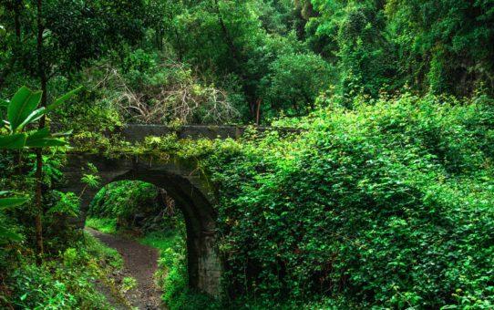 Лавровые леса на Канарских островах