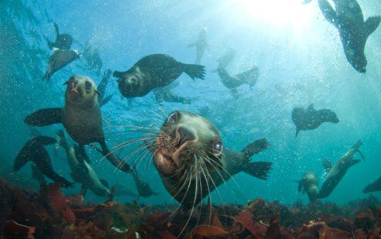 Подводное плавание с тюленями в Кейптауне