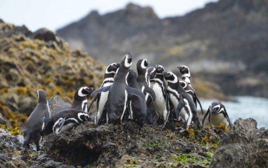 Пингвинье сафари в Патагонии