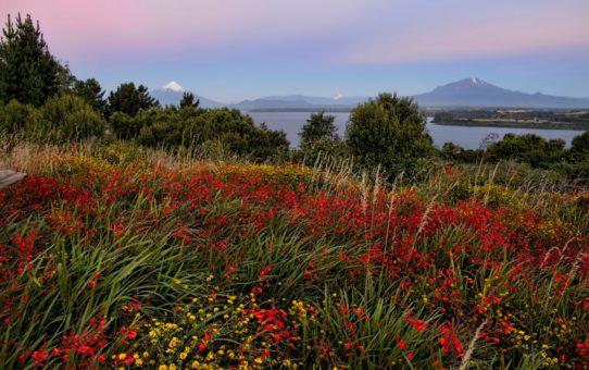 Полевые цветы Патагонии