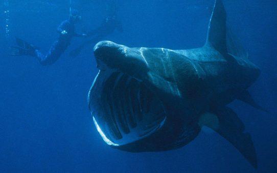 Наблюдение за акулами в Англии