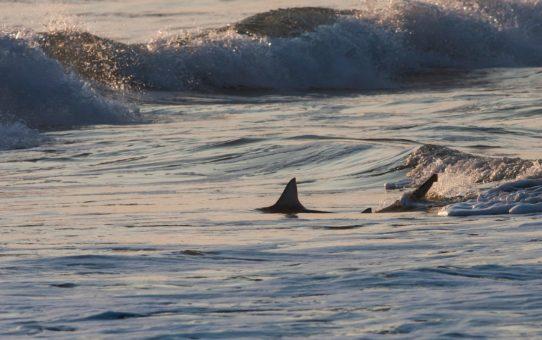 Блэктип и Спиннер Акулы в Майами