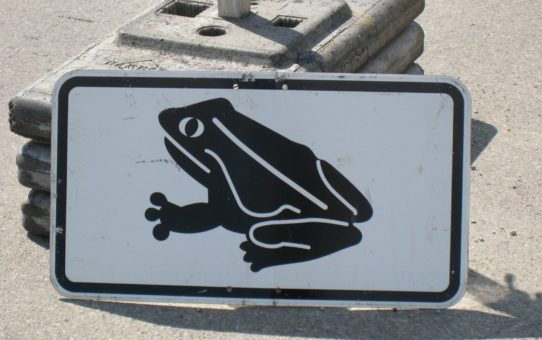 Миграция жаб в Германии