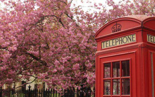 Весенние цветы в Лондоне