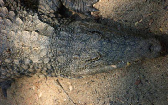 Спелеология с крокодилами, Мадагаскар