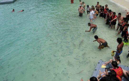 Кормление младенца акул в Малайзии