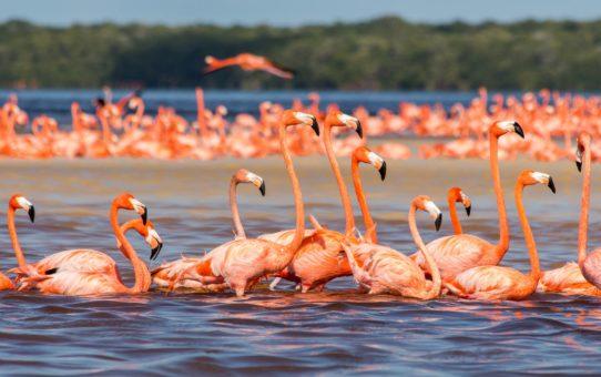 Наблюдение за фламинго в Малайзии