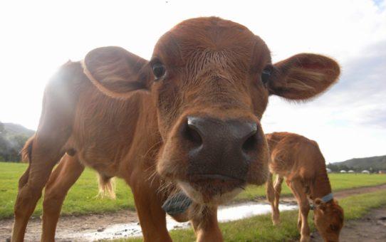 Наблюдение за новорожденными животными на землях кочевников