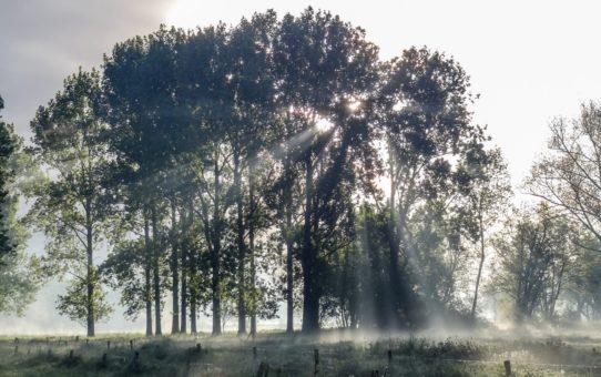 """Рассвет """"Сорок дней после Пасхи"""" в Нидерландах"""