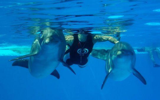 Плавание с дельфинами в Португалии