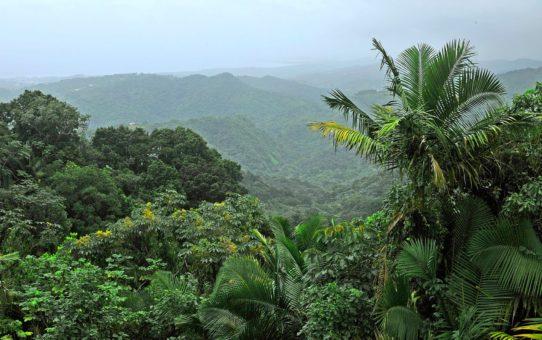 Карибский национальный лес