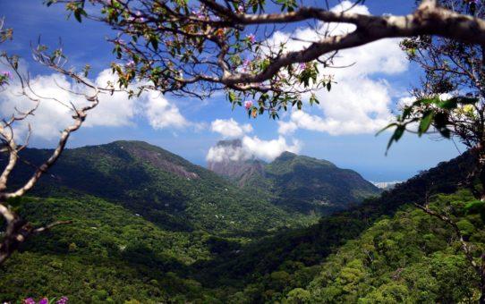 Национальный парк Тижука в Бразилии