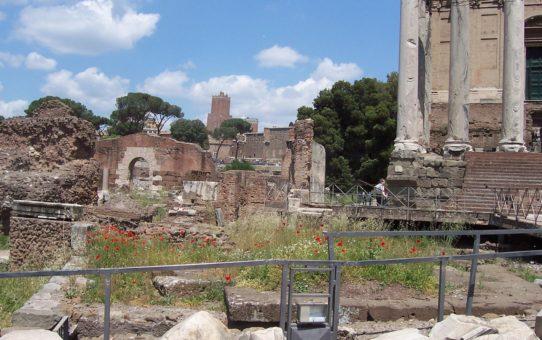 Маки на римском форуме