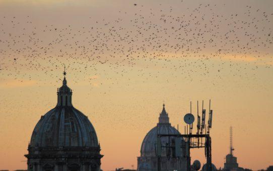 Мурмурация скворцов в Риме