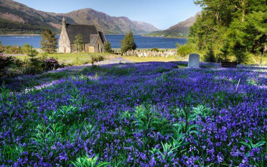 Цветущие колокольчики в Шотландии