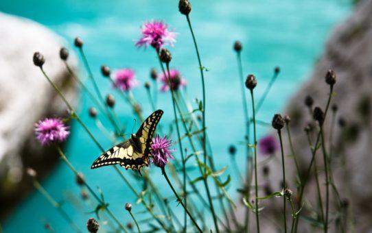 Сезон полевых цветов в Словнении