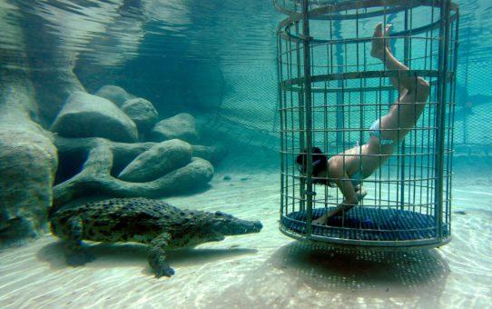 Дайвинг в крокодиловой клетке в ЮАР