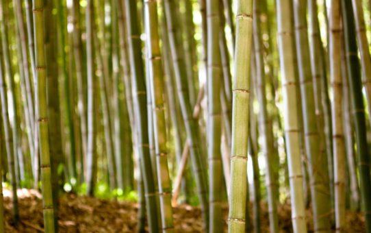 Фестиваль бамбука Дамьян в Южной Кореи