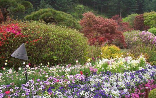 Цветы в саду утренней свежести в Южной Кореи