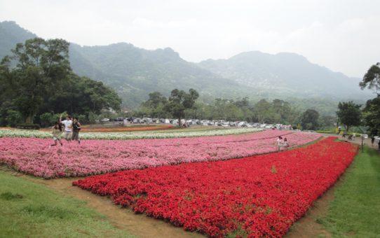 Цветущий Оазис Та Ши в Тайване