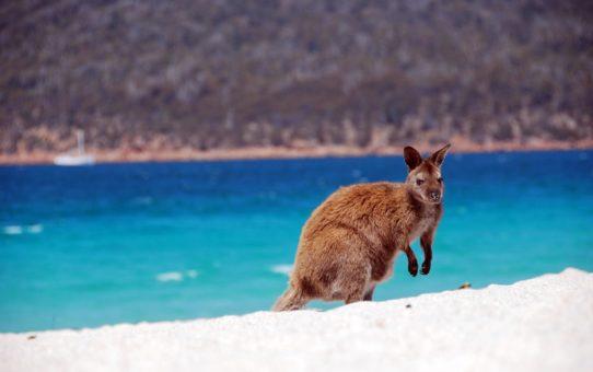 Тасманский пляжный сезон в Австралии