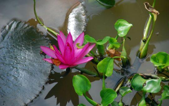 Цветочный сезон в дельте Меконга