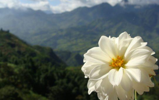 Сезон цветения Са Па во Вьетнаме