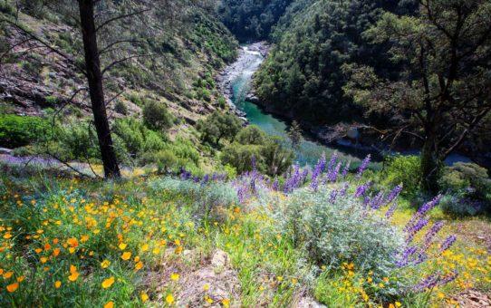 Полевые цветы Йосемити, Калифорния