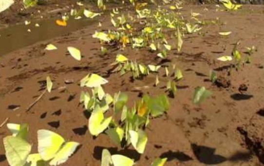 Бабочки в долине Тукавака, Боливия